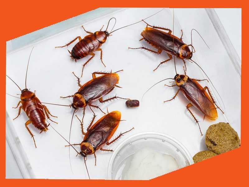 уничтожение тараканов Ярославль